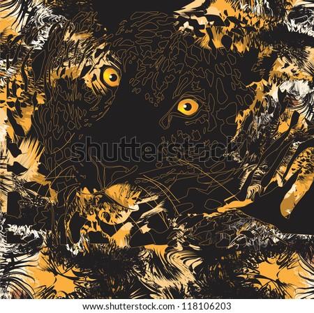 Tiger (animal predator) - stock photo