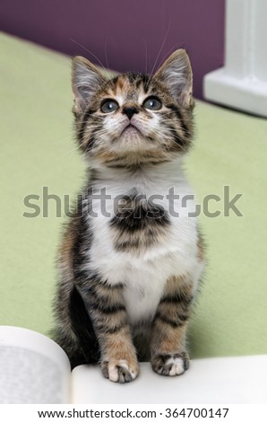 Tiger Colored Kitten Paying Attention with Paws on Book - stock photo