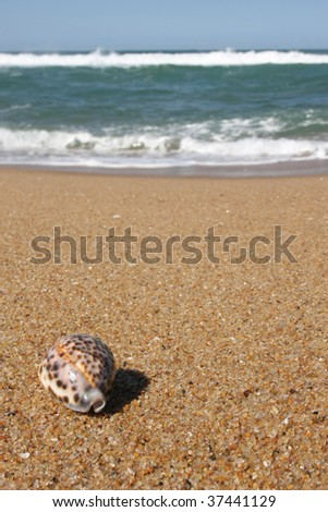 Tiger Cowrie Shell on a Sea landscape - sea, golden beach, the blue sky - stock photo