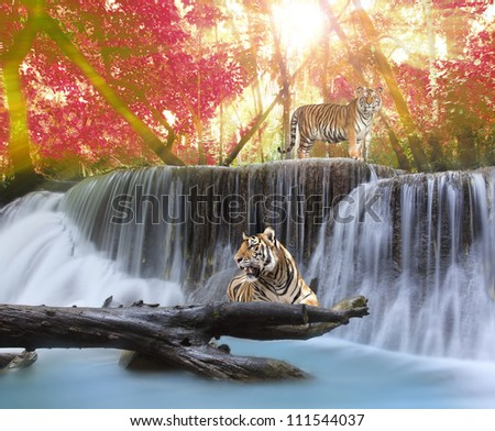 Tiger in the jungle - stock photo