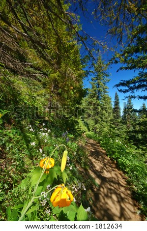 Tiger Lilies, Lilium columbianum, in an alpine medow in Washington State - stock photo