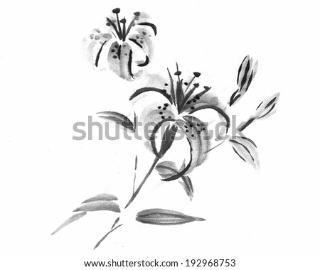Tiger Lily on White Background -Ink Painting. - stock photo