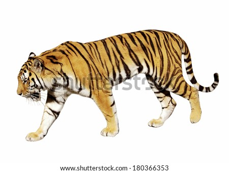 tiger on white - stock photo