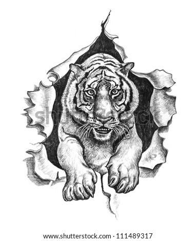 Tiger ripped metal. Pencil drawing illustration. - stock photo