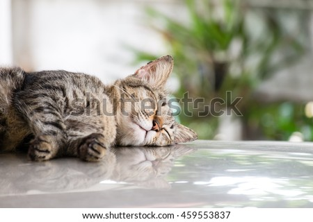 Tiger (tabby) cat sleeping on car. Selective focus. - stock photo