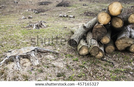 Timber harvesting. Pile of logs and lots of stumps in the wood-cutting area in the forest in early spring.  - stock photo