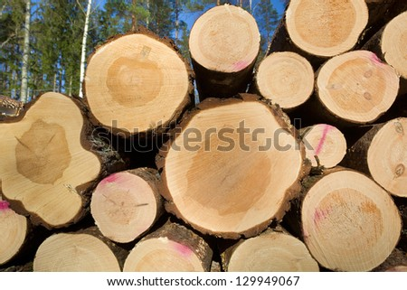 Timber in forest - stock photo