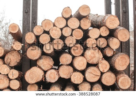 timber logs stacked natural material - stock photo