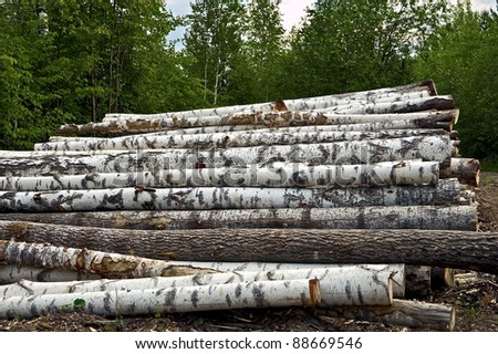 Timber pile of birch, pine, aspen, against the background of green forest and the sky - stock photo