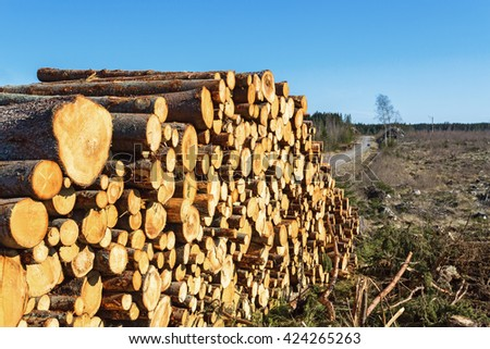 Timber stack at the edge of the clear-cut area - stock photo