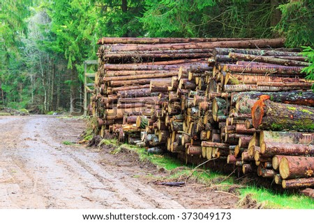 Timber stack by the road in the woods - stock photo
