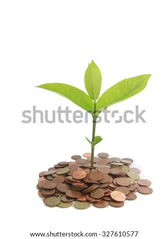 time and on line business to make money and profit idea trees growing on stack of coins - stock photo