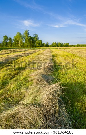 Time of hayfield. Kaluga region of Russia - stock photo