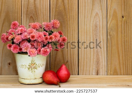 Tin pot of pink flowers - mums - by pears and rustic wooden background - stock photo
