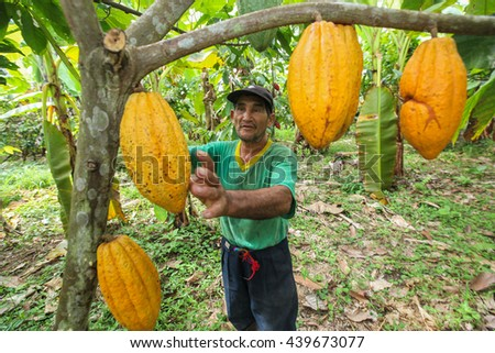 TINGO MARIA, PERU - JUNE 22: A view of the cocoa growers from Naranjillo cooperative in rainforest nearby Tingo Maria in Peru, 2011 - stock photo