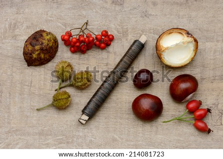tinker with autumn fruits - stock photo