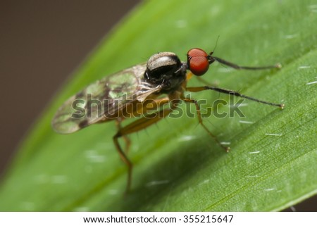 tiny flies - stock photo