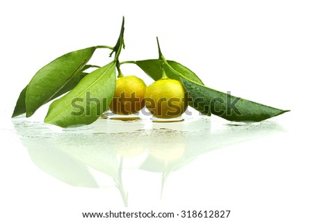 Tiny fresh oranges or tangerines on leafy branch isolated on white background. - stock photo