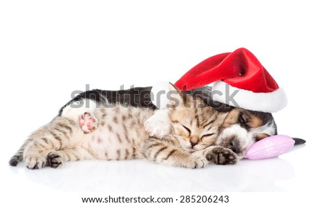 Tiny kitten and basset hound puppy in red santa hat sleeping on a pillow. isolated on white background - stock photo
