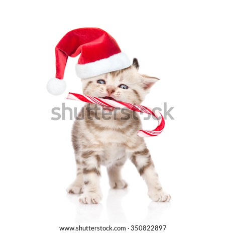 Tiny kitten in red christmas hat holding candy cane in mouth. isolated on white background - stock photo