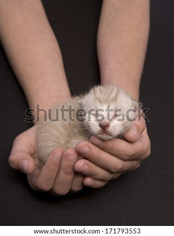 Tiny kitten sleeping in two hands - stock photo