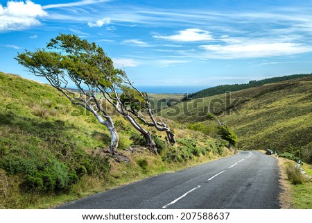 tiny mountain road with trees formed by wind - stock photo