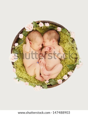 Tiny newborn baby twins sleeping curled up together in flowery planter - stock photo