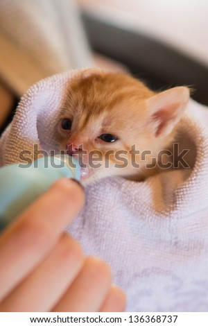 Tiny red kitten drinking frm a bottle - stock photo