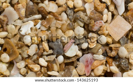 Tiny Shells pebblles and fossils on the beach - stock photo