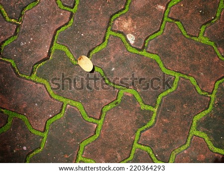 tiny soft  green moss and brown brick, wet dirty curb stone, carpet stone near a garden pond close up under sunlight - stock photo