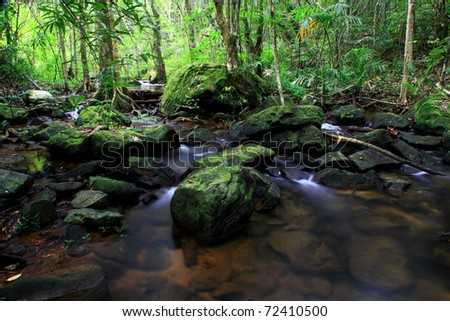 tiny stream in the jungle - stock photo