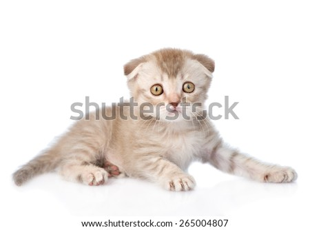 Tiny tabby kitten looking at camera. isolated on white background - stock photo