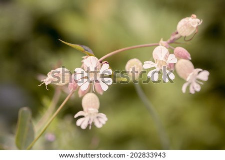 Tiny wildflowers growing along the roadside. - stock photo