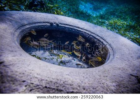 Tire Found Underwater with many fish around it - stock photo