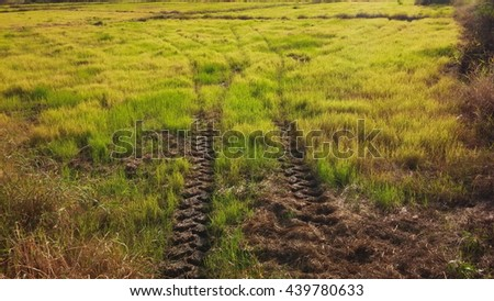 tire track on mud way in green grassland - stock photo