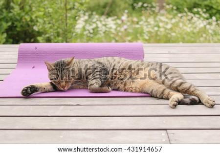 tired cat sleeping on yoga mat  on wooden terrace beside garden - stock photo