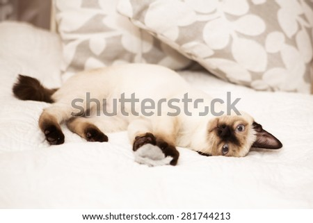 Tired kitten looks directly at the camera - stock photo