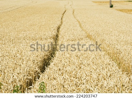 Tiretracks in wheatfield - stock photo