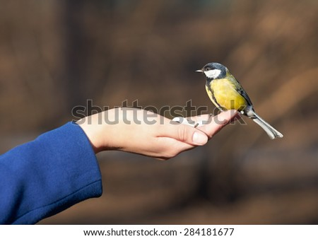 titmouse in hand - stock photo