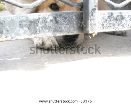 Titus on the other side of the gate - stock photo