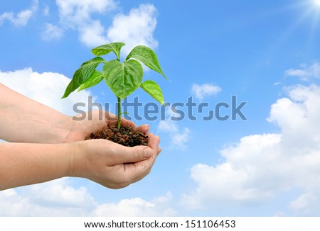 To the sun. Seedling of young plant and human hands on the cloudy sky background  - stock photo