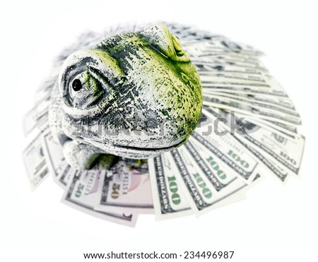 Toad and US dollars isolated on white - stock photo