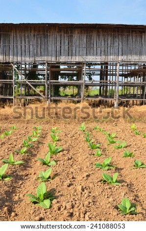 tobacco curing barns. - stock photo