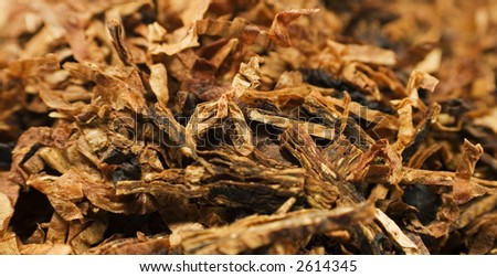 tobacco from close (loose cut style) - stock photo