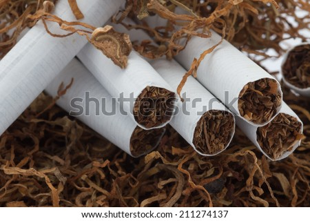 Tobacco pile and cigarettes - stock photo