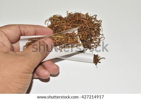 tobacco,tobacco line,Cigarette tobacco,Native tobacco - stock photo
