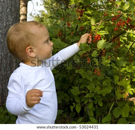 Toddler (one year old) picking redcurrants in a garden - stock photo