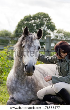 Togetherness- beautiful grey horse lies being petted by her pretty young owner, showing a bond of trust and love. - stock photo