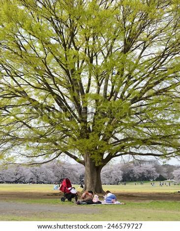 TOKYO,JAPAN - APRIL 9 : Giant tree, People enjoy Showa Park in spring taken April 9, 2014 in Tokyo. Showa Park is a popular place for enjoy sakura flower in early spring in Tokyo. - stock photo