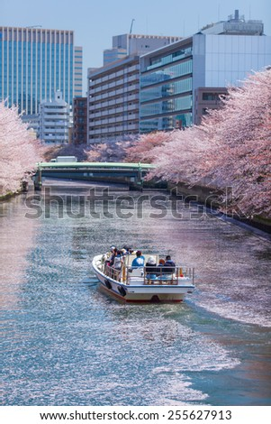 Tokyo, Japan - April 12, 2012 : Japanese people is sitting in small boat seeing Sakura blossom at Monzennakacho canal , in Tokyo, Japan - stock photo